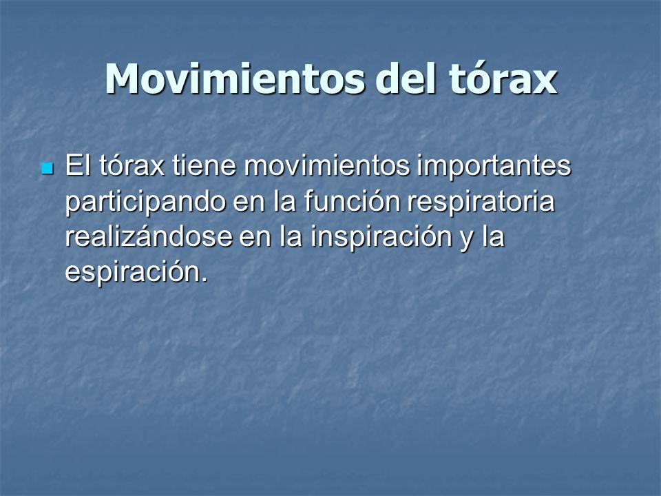 Movimientos del tórax El tórax tiene movimientos importantes participando en la función respiratoria realizándose en la inspiración y la espiración.