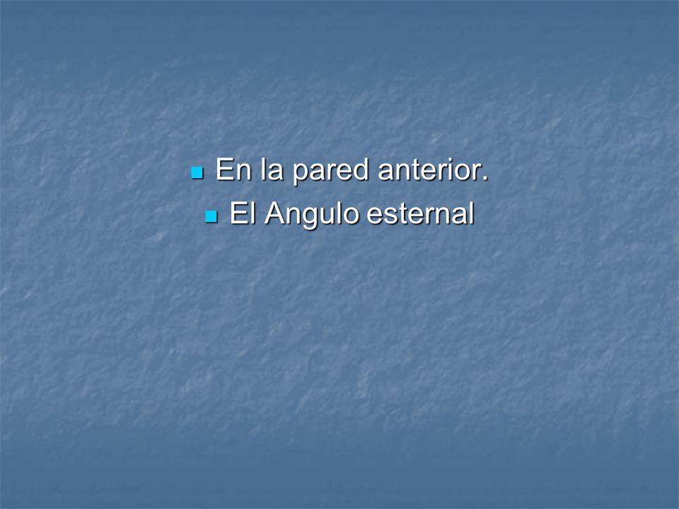 En la pared anterior. En la pared anterior. El Angulo esternal El Angulo esternal