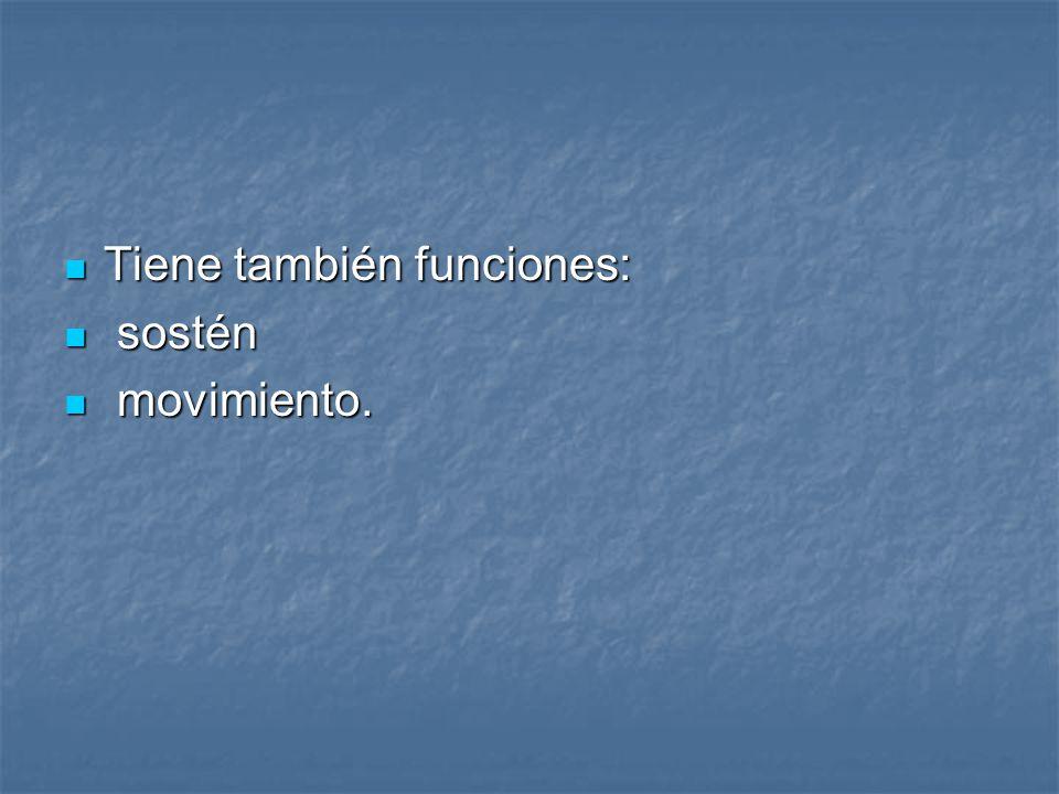 Tiene también funciones: Tiene también funciones: sostén sostén movimiento. movimiento.