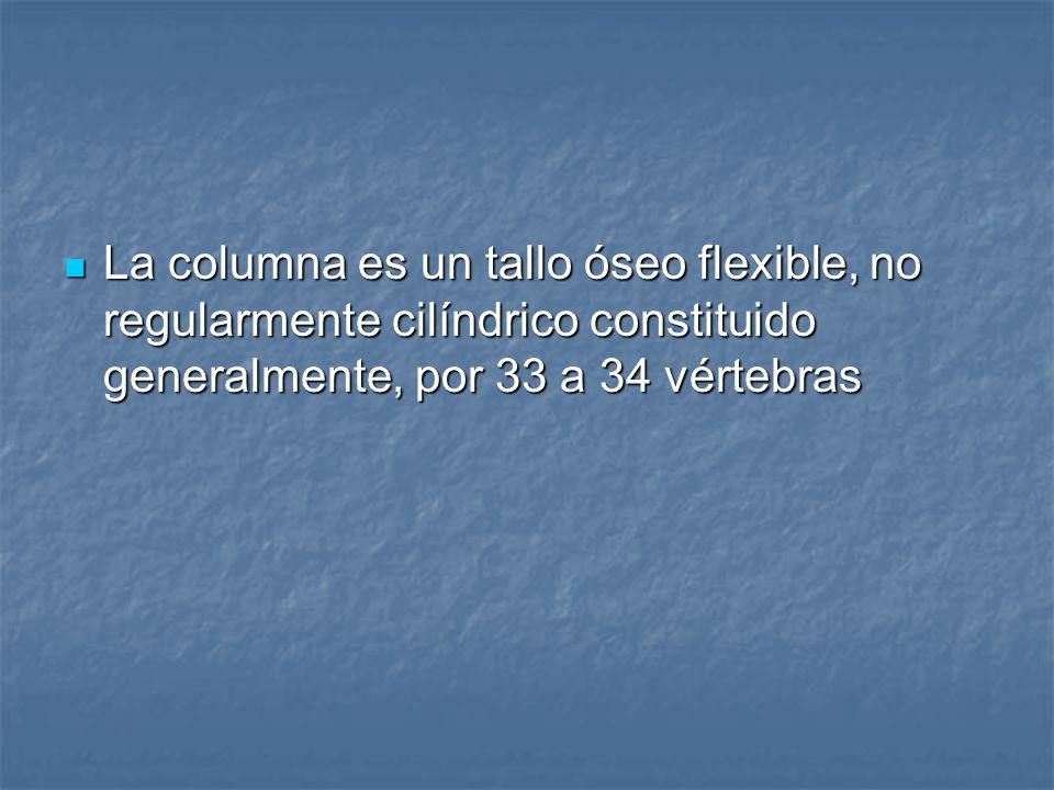 La columna es un tallo óseo flexible, no regularmente cilíndrico constituido generalmente, por 33 a 34 vértebras La columna es un tallo óseo flexible, no regularmente cilíndrico constituido generalmente, por 33 a 34 vértebras