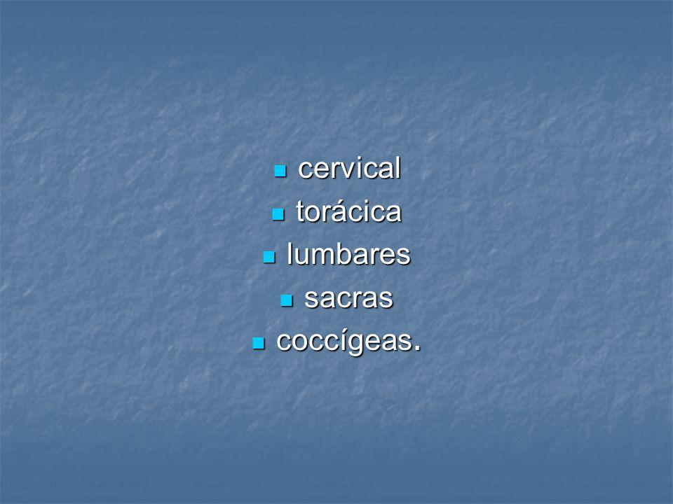 cervical cervical torácica torácica lumbares lumbares sacras sacras coccígeas. coccígeas.