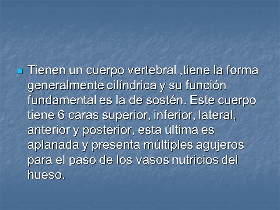Características particulares de las vértebras.