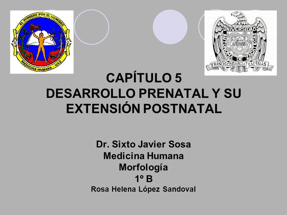CAPÍTULO 5 DESARROLLO PRENATAL Y SU EXTENSIÓN POSTNATAL Dr. Sixto Javier Sosa Medicina Humana Morfología 1º B Rosa Helena López Sandoval