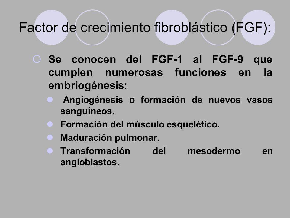 Factor de crecimiento fibroblástico (FGF): Se conocen del FGF-1 al FGF-9 que cumplen numerosas funciones en la embriogénesis: Angiogénesis o formación