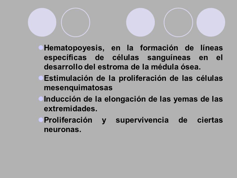 Hematopoyesis, en la formación de líneas específicas de células sanguíneas en el desarrollo del estroma de la médula ósea. Estimulación de la prolifer