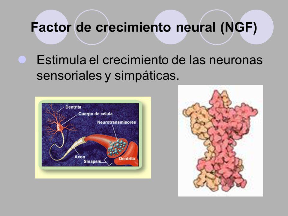 Factor de crecimiento neural (NGF) Estimula el crecimiento de las neuronas sensoriales y simpáticas.
