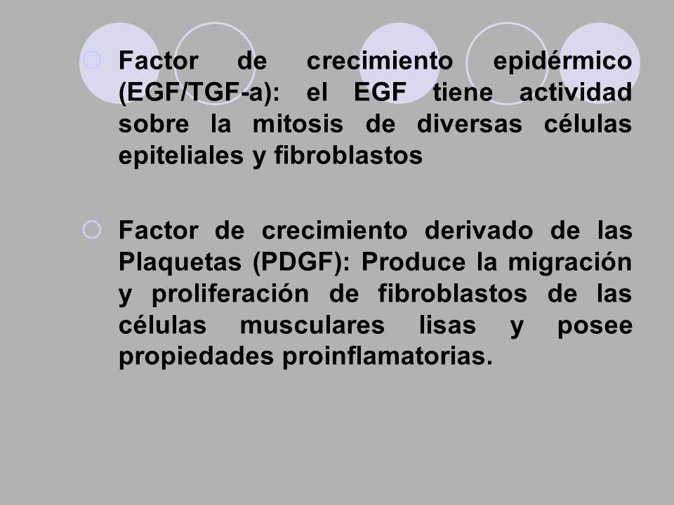 Factor de crecimiento epidérmico (EGF/TGF-a): el EGF tiene actividad sobre la mitosis de diversas células epiteliales y fibroblastos Factor de crecimi