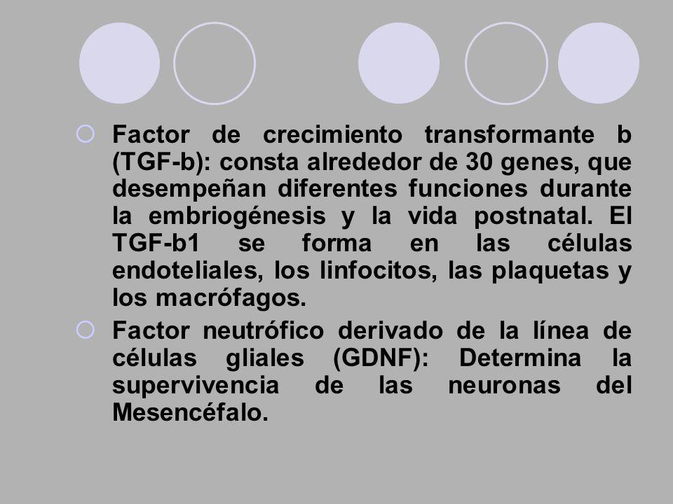 Factor de crecimiento transformante b (TGF-b): consta alrededor de 30 genes, que desempeñan diferentes funciones durante la embriogénesis y la vida po