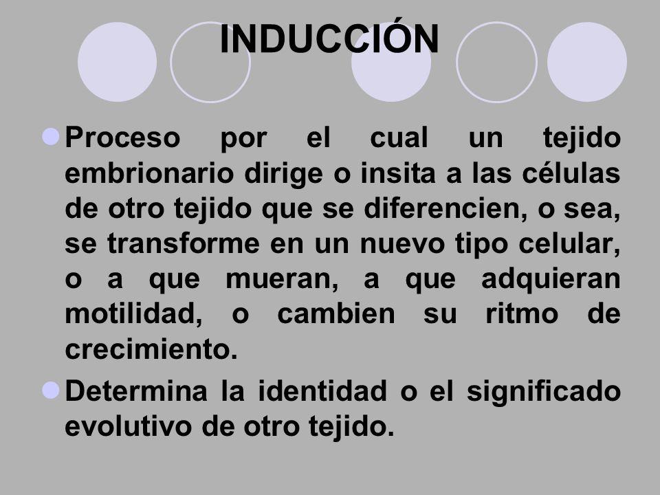 INDUCCIÓN Proceso por el cual un tejido embrionario dirige o insita a las células de otro tejido que se diferencien, o sea, se transforme en un nuevo