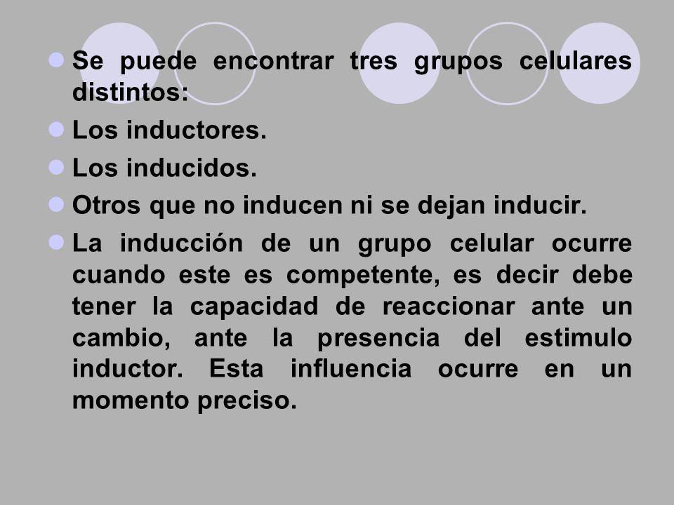 Se puede encontrar tres grupos celulares distintos: Los inductores. Los inducidos. Otros que no inducen ni se dejan inducir. La inducción de un grupo