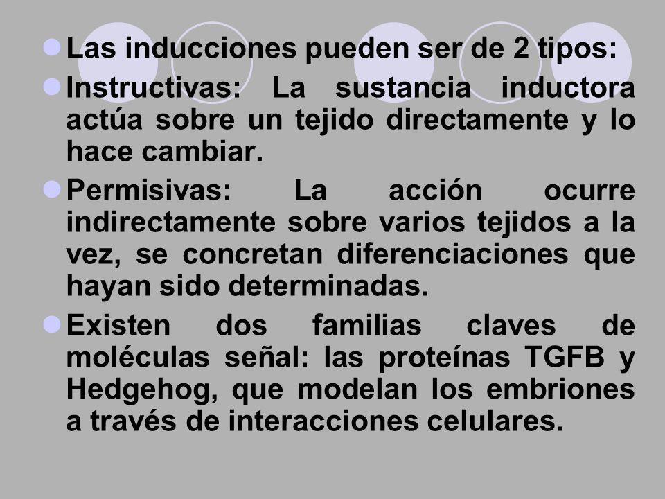 Las inducciones pueden ser de 2 tipos: Instructivas: La sustancia inductora actúa sobre un tejido directamente y lo hace cambiar. Permisivas: La acció
