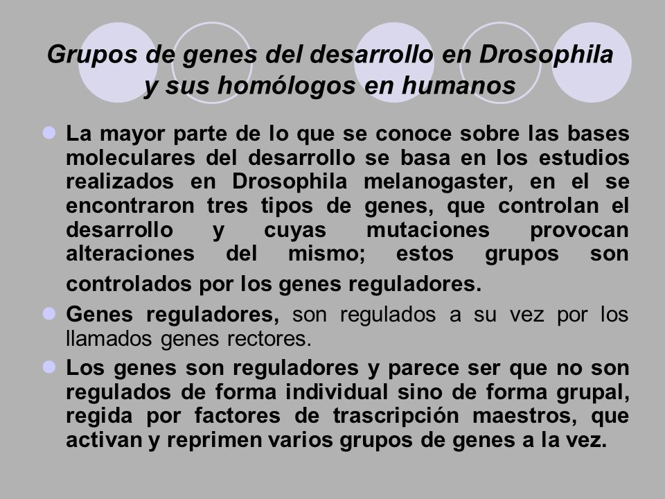 Grupos de genes del desarrollo en Drosophila y sus homólogos en humanos La mayor parte de lo que se conoce sobre las bases moleculares del desarrollo