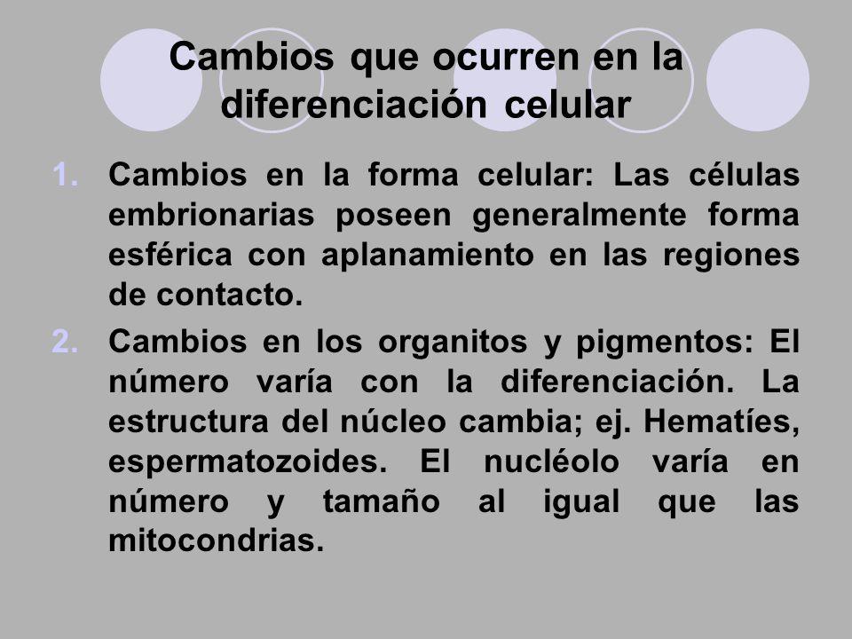Cambios que ocurren en la diferenciación celular 1.Cambios en la forma celular: Las células embrionarias poseen generalmente forma esférica con aplana