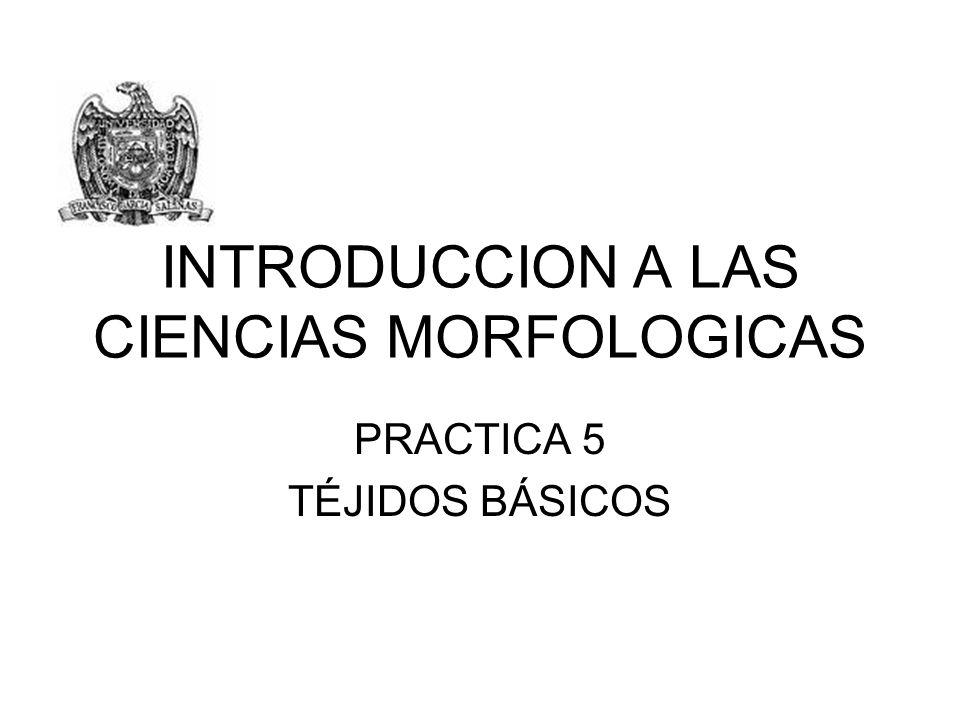 INTRODUCCION A LAS CIENCIAS MORFOLOGICAS PRACTICA 5 TÉJIDOS BÁSICOS