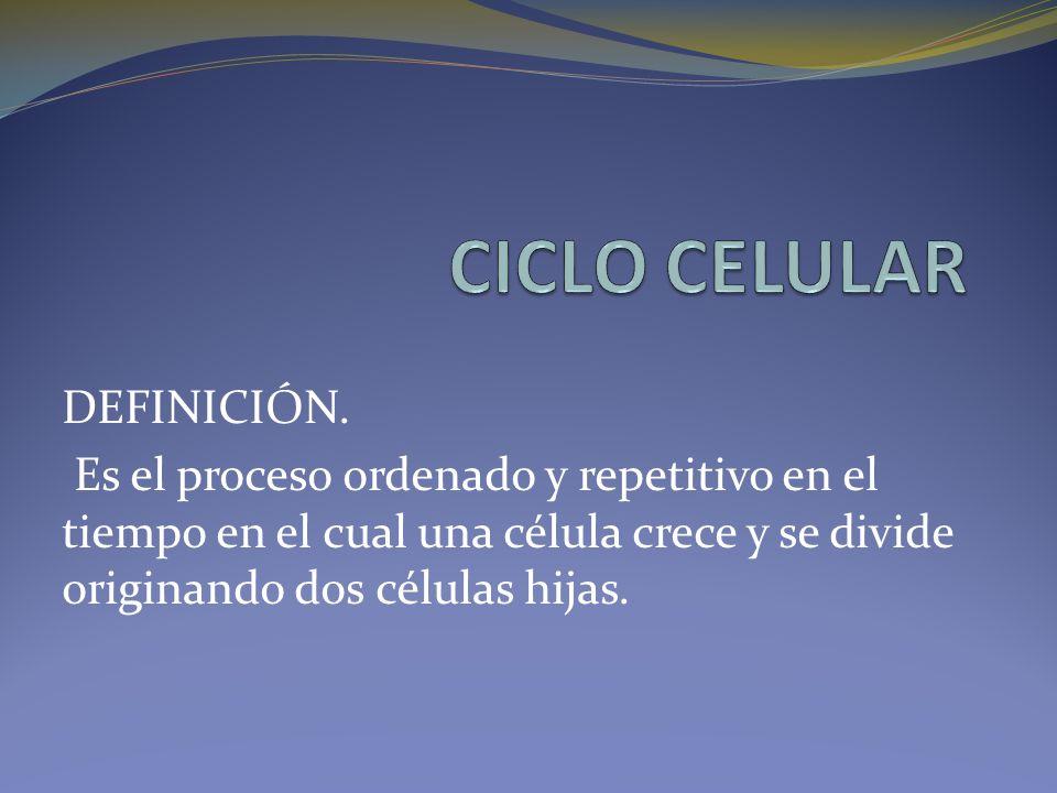 DEFINICIÓN. Es el proceso ordenado y repetitivo en el tiempo en el cual una célula crece y se divide originando dos células hijas.