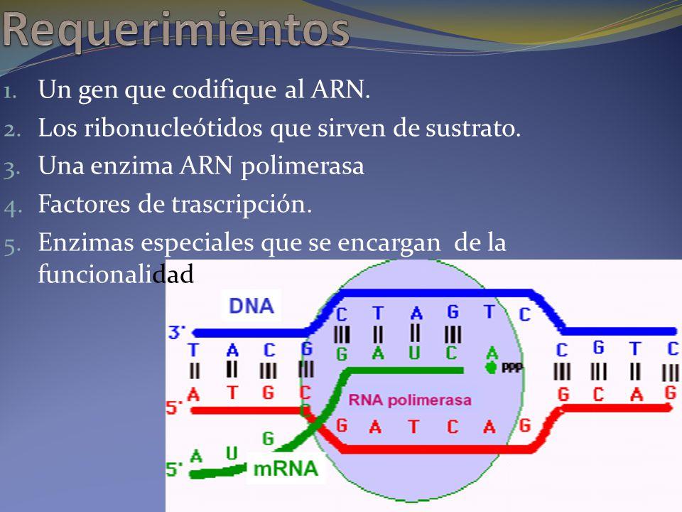 1. Un gen que codifique al ARN. 2. Los ribonucleótidos que sirven de sustrato. 3. Una enzima ARN polimerasa 4. Factores de trascripción. 5. Enzimas es