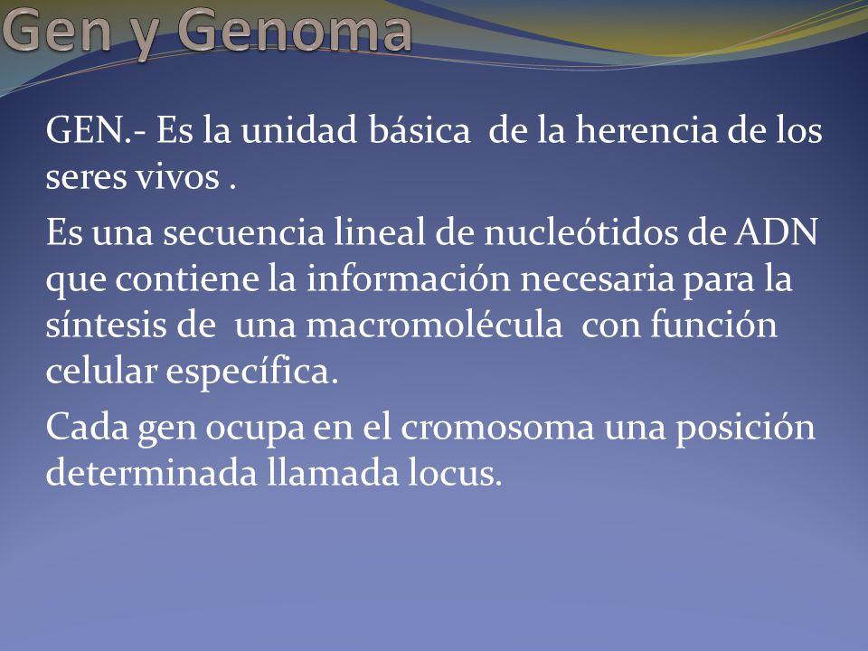 GEN.- Es la unidad básica de la herencia de los seres vivos. Es una secuencia lineal de nucleótidos de ADN que contiene la información necesaria para