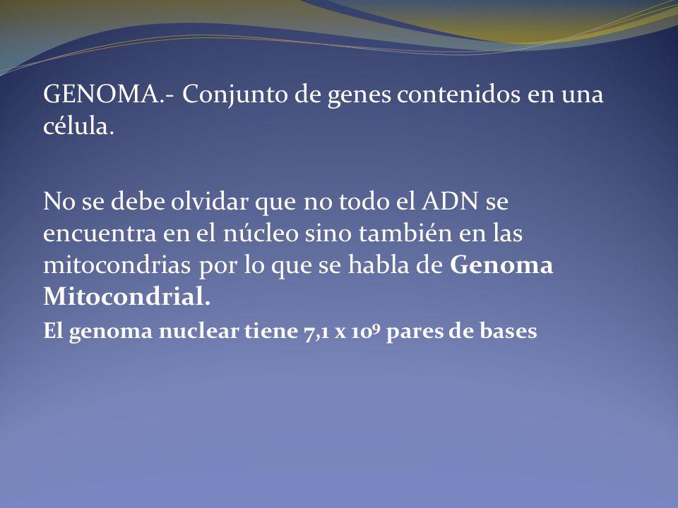 GENOMA.- Conjunto de genes contenidos en una célula. No se debe olvidar que no todo el ADN se encuentra en el núcleo sino también en las mitocondrias