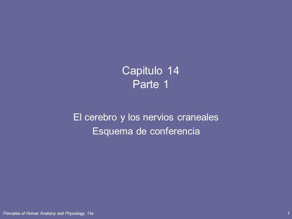 Principles of Human Anatomy and Physiology, 11e1 Capitulo 14 Parte 1 El cerebro y los nervios craneales Esquema de conferencia