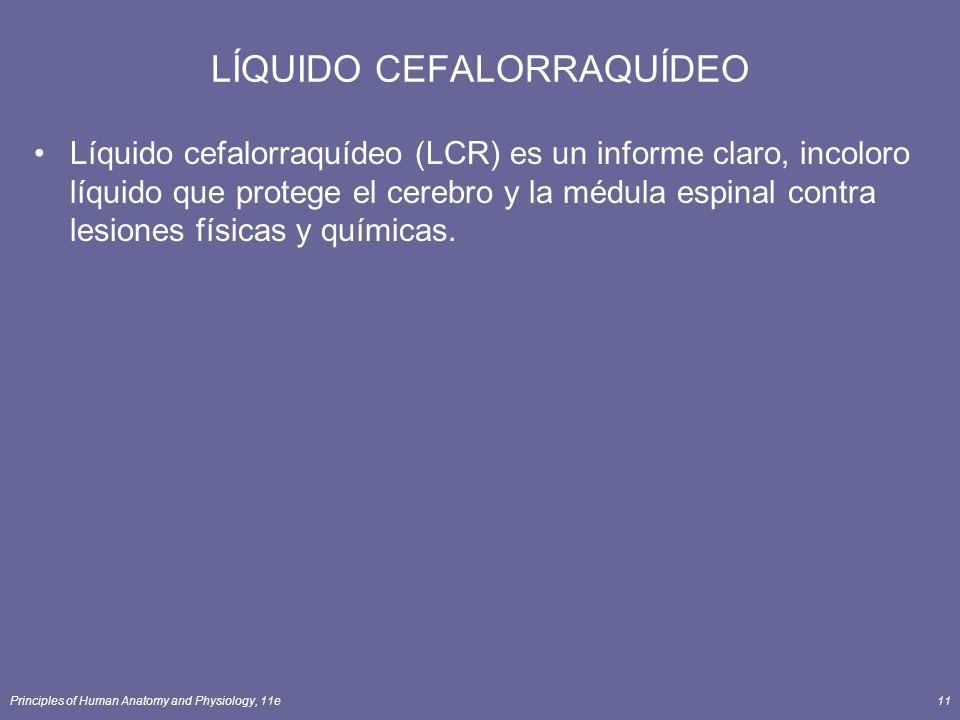 Principles of Human Anatomy and Physiology, 11e11 LÍQUIDO CEFALORRAQUÍDEO Líquido cefalorraquídeo (LCR) es un informe claro, incoloro líquido que prot