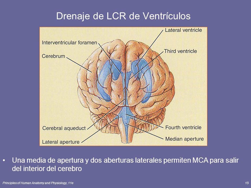 Principles of Human Anatomy and Physiology, 11e15 Drenaje de LCR de Ventrículos Una media de apertura y dos aberturas laterales permiten MCA para sali