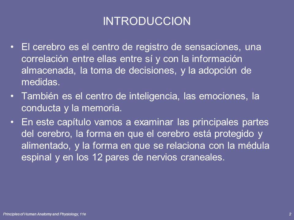 Principles of Human Anatomy and Physiology, 11e2 INTRODUCCION El cerebro es el centro de registro de sensaciones, una correlación entre ellas entre sí