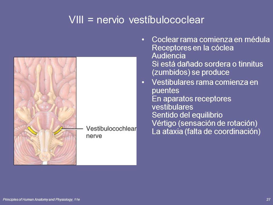 Principles of Human Anatomy and Physiology, 11e27 VIII = nervio vestíbulococlear Coclear rama comienza en médula Receptores en la cóclea Audiencia Si