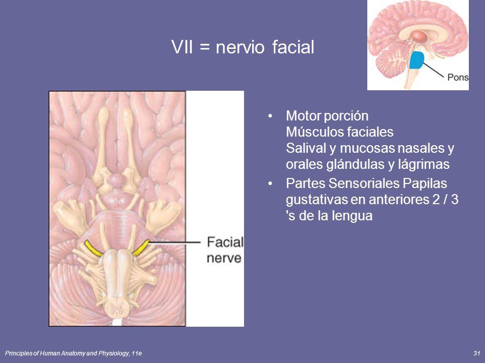 Principles of Human Anatomy and Physiology, 11e31 VII = nervio facial Motor porción Músculos faciales Salival y mucosas nasales y orales glándulas y l