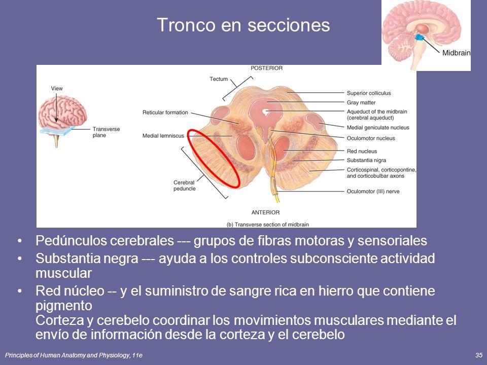 Principles of Human Anatomy and Physiology, 11e35 Tronco en secciones Pedúnculos cerebrales --- grupos de fibras motoras y sensoriales Substantia negr
