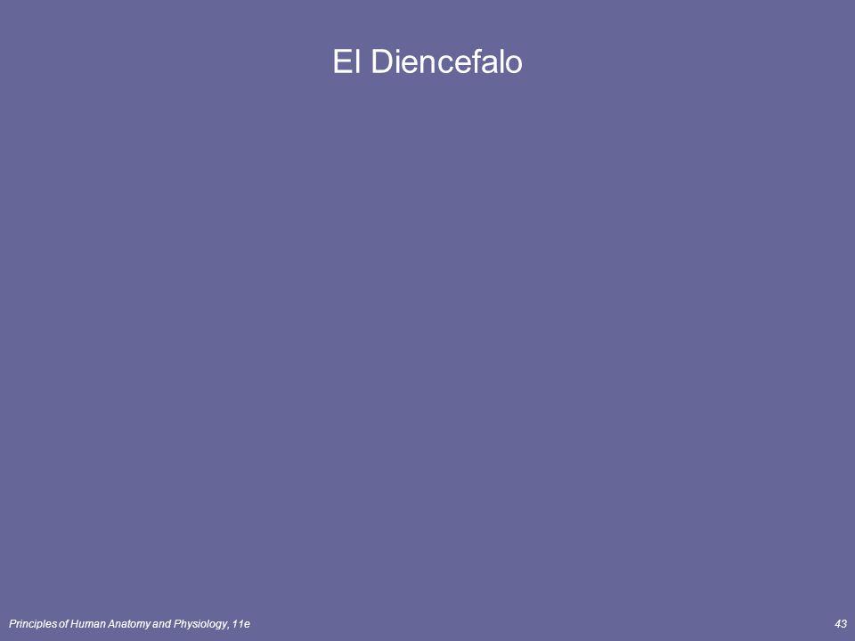 Principles of Human Anatomy and Physiology, 11e43 El Diencefalo