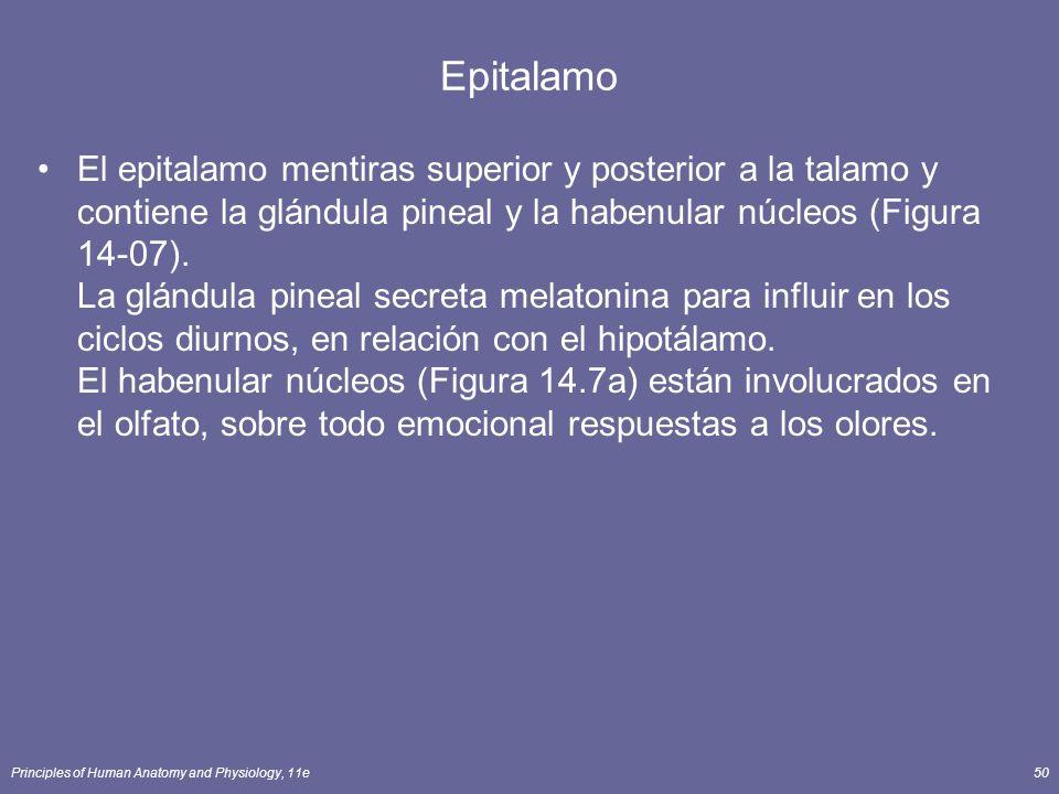 Principles of Human Anatomy and Physiology, 11e50 Epitalamo El epitalamo mentiras superior y posterior a la talamo y contiene la glándula pineal y la