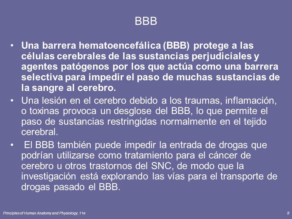 Principles of Human Anatomy and Physiology, 11e8 BBB Una barrera hematoencefálica (BBB) protege a las células cerebrales de las sustancias perjudicial