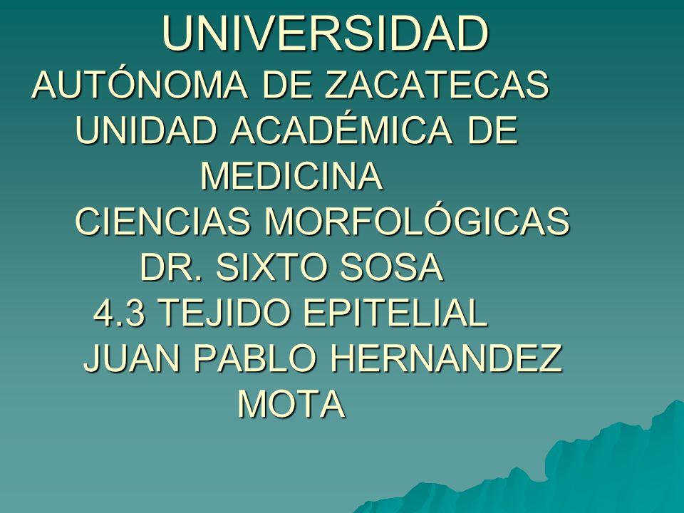 UNIVERSIDAD AUTÓNOMA DE ZACATECAS UNIDAD ACADÉMICA DE MEDICINA CIENCIAS MORFOLÓGICAS DR. SIXTO SOSA 4.3 TEJIDO EPITELIAL JUAN PABLO HERNANDEZ MOTA