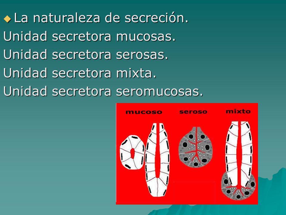 La naturaleza de secreción. La naturaleza de secreción. Unidad secretora mucosas. Unidad secretora serosas. Unidad secretora mixta. Unidad secretora s
