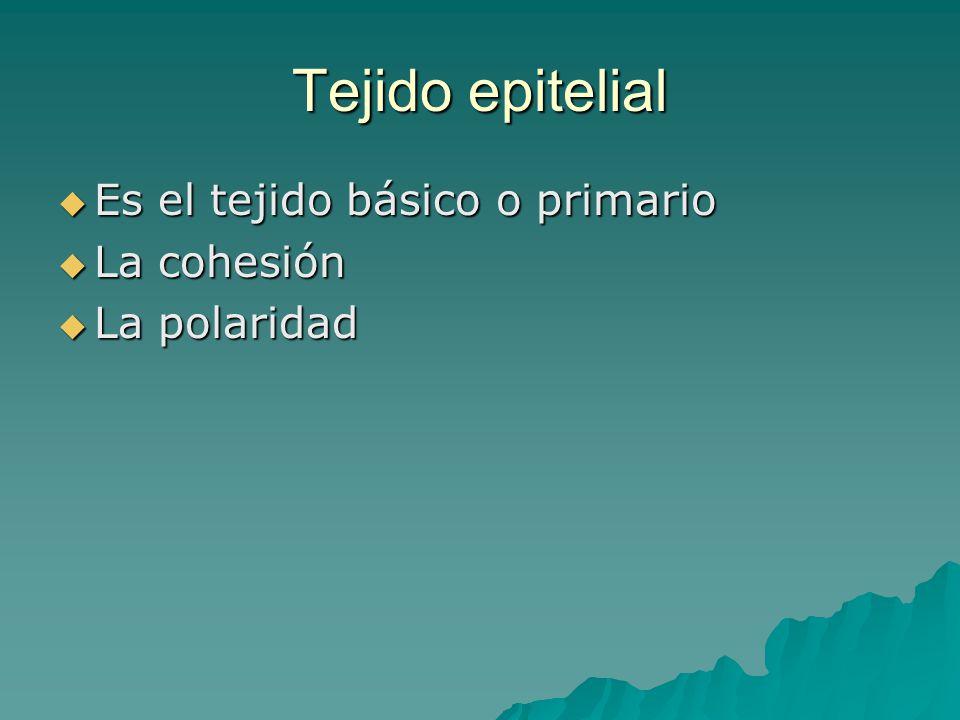 Tejido epitelial Es el tejido básico o primario Es el tejido básico o primario La cohesión La cohesión La polaridad La polaridad