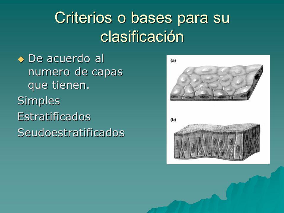 Criterios o bases para su clasificación De acuerdo al numero de capas que tienen.