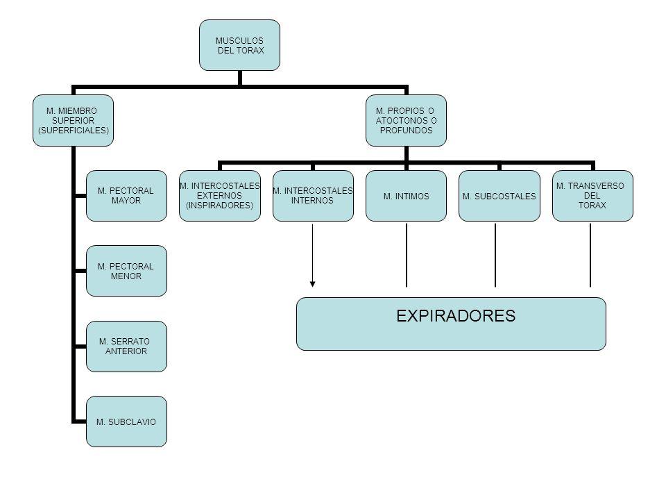 EXPIRADORES