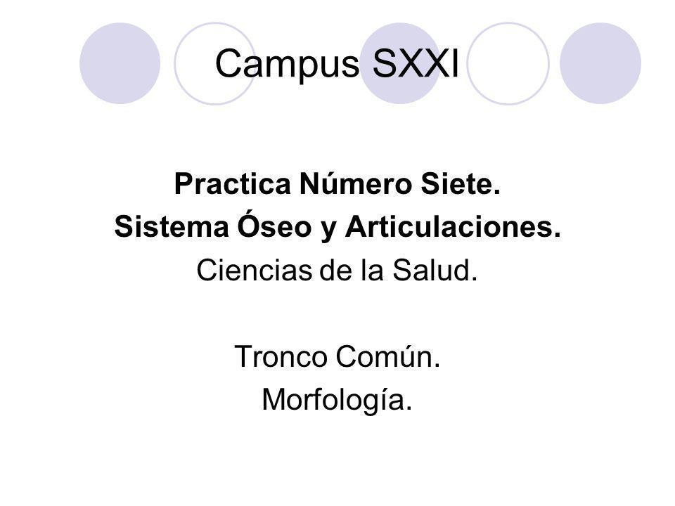 Campus SXXI Practica Número Siete. Sistema Óseo y Articulaciones. Ciencias de la Salud. Tronco Común. Morfología.