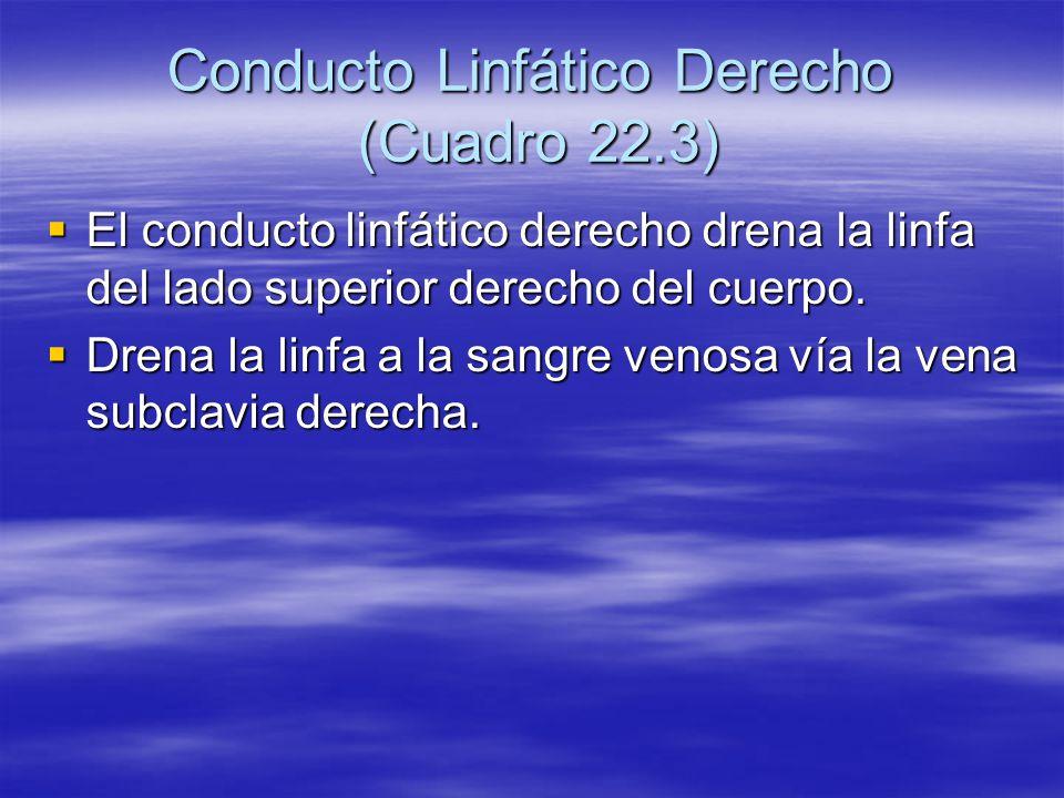Conducto Linfático Derecho (Cuadro 22.3) El conducto linfático derecho drena la linfa del lado superior derecho del cuerpo. El conducto linfático dere