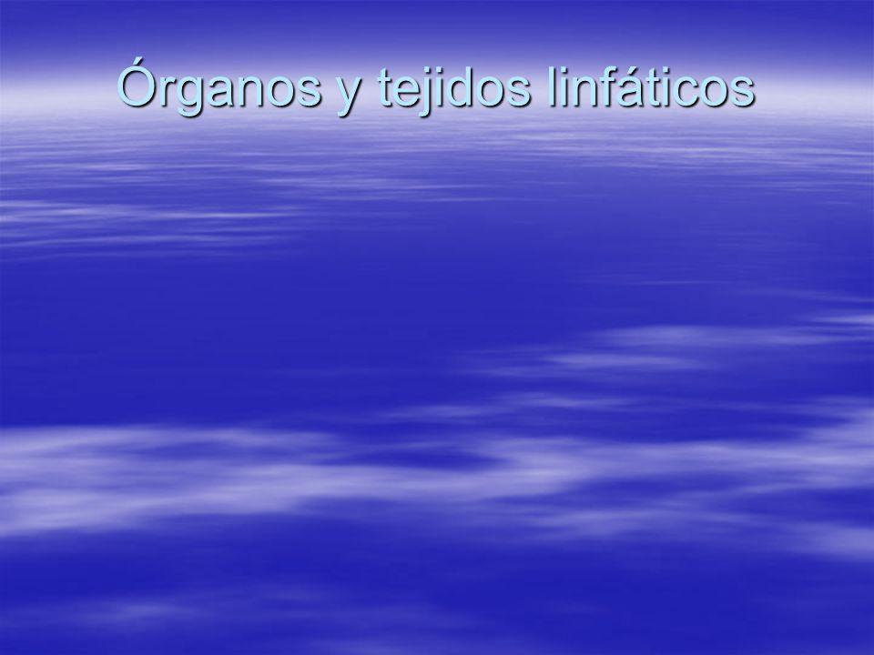 Órganos y tejidos linfáticos