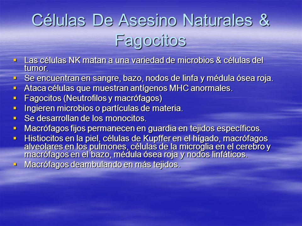 Células De Asesino Naturales & Fagocitos Las células NK matan a una variedad de microbios & células del tumor. Las células NK matan a una variedad de