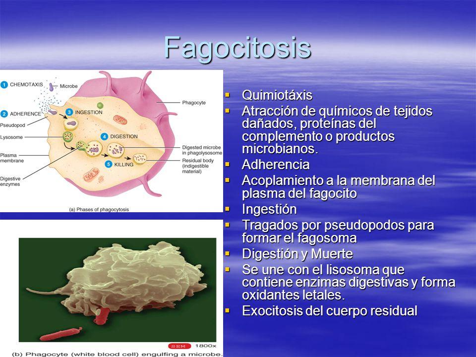 Inflamación Inicia en células dañadas.Inicia en células dañadas.