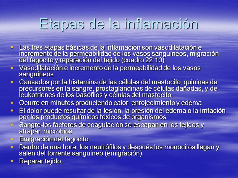Etapas de la inflamación Las tres etapas básicas de la inflamación son vasodilatación e incremento de la permeabilidad de los vasos sanguíneos, migrac