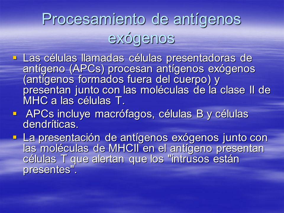 Procesamiento de antígenos exógenos Las células llamadas células presentadoras de antígeno (APCs) procesan antígenos exógenos (antígenos formados fuer
