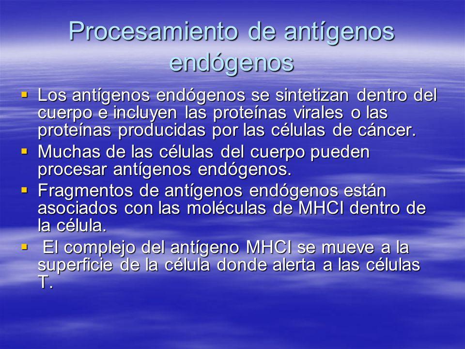 Procesamiento de antígenos endógenos Los antígenos endógenos se sintetizan dentro del cuerpo e incluyen las proteínas virales o las proteínas producid
