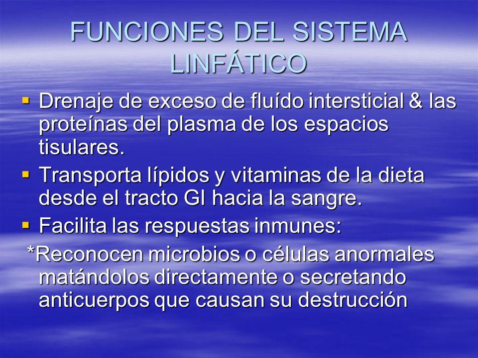 FUNCIONES DEL SISTEMA LINFÁTICO Drenaje de exceso de fluído intersticial & las proteínas del plasma de los espacios tisulares. Drenaje de exceso de fl