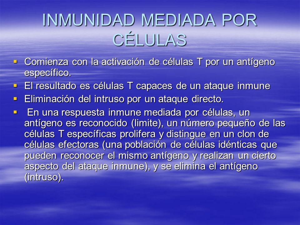 INMUNIDAD MEDIADA POR CÉLULAS Comienza con la activación de células T por un antígeno específico. Comienza con la activación de células T por un antíg