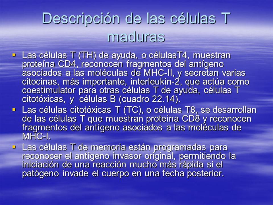 Descripción de las células T maduras Las células T (TH) de ayuda, o célulasT4, muestran proteína CD4, reconocen fragmentos del antígeno asociados a la
