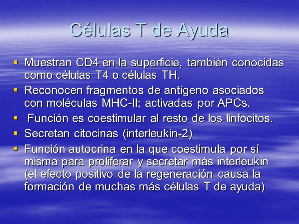 Células T de Ayuda Muestran CD4 en la superficie, también conocidas como células T4 o células TH. Muestran CD4 en la superficie, también conocidas com