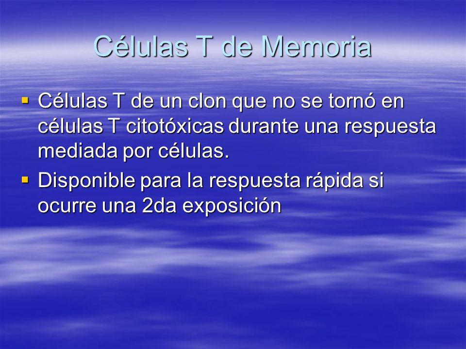 Células T de Memoria Células T de un clon que no se tornó en células T citotóxicas durante una respuesta mediada por células. Células T de un clon que